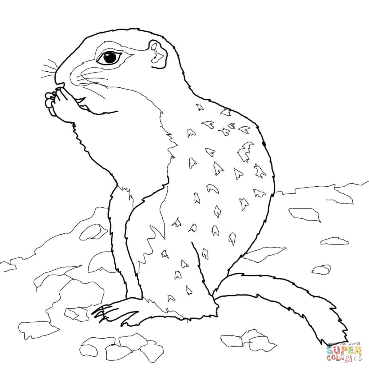 Arctic Ground Squirrel coloring page.