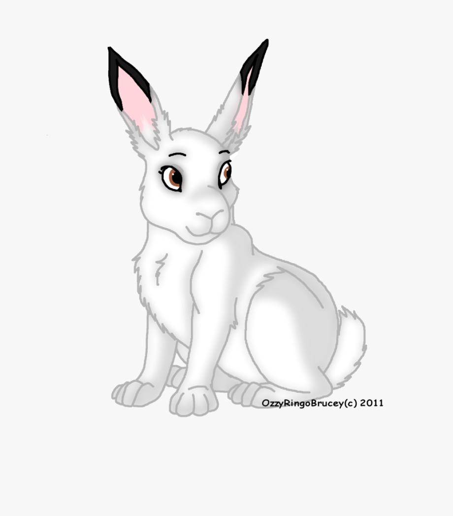 Arctic Hare Clipart , Transparent Cartoon, Free Cliparts.