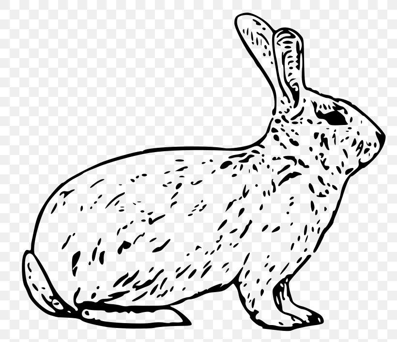 Snowshoe Hare Arctic Hare Rabbit Clip Art, PNG, 800x706px.