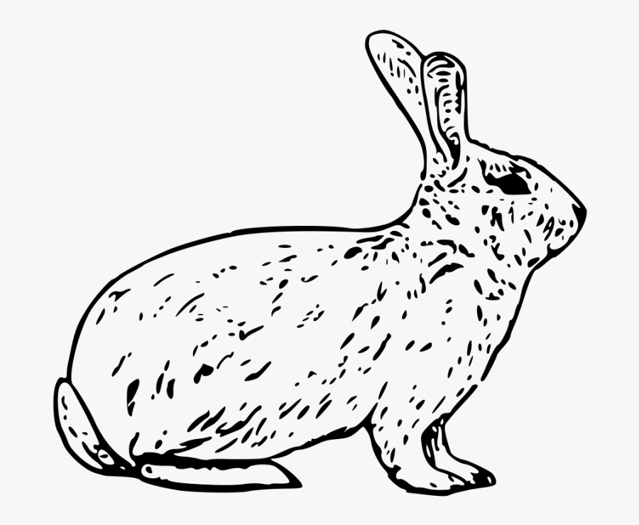 Rabbit Clipart Black And White.