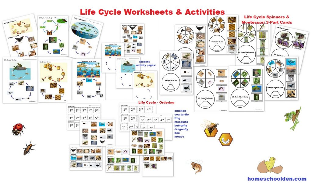 Life Cycles Packet (50+ pages).