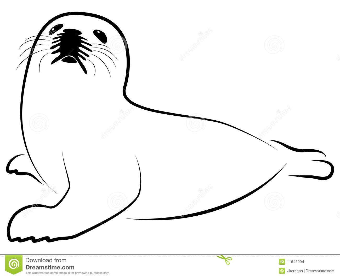 arctic baby seal illustration.