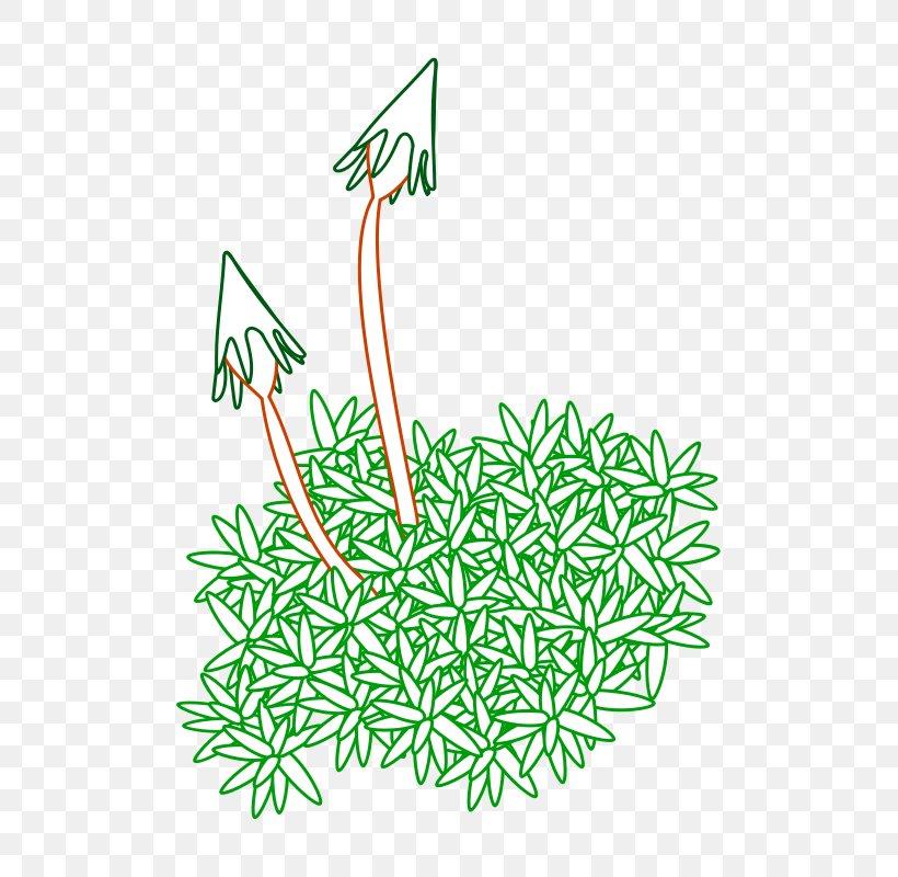 Spanish Moss Flora Of The Canadian Arctic Archipelago Clip.