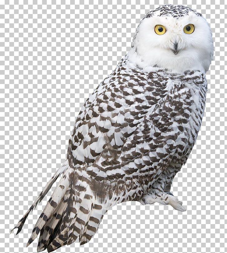 Snowy owl Bird Arctic fox, Transparent White Owl , white and.