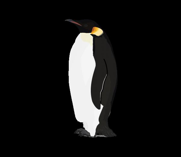Clipart penquin arctic penguin, Clipart penquin arctic.