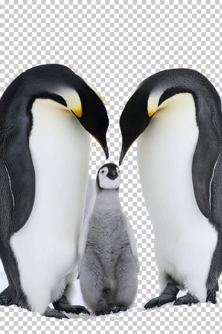 Antarctica Fiordland penguin Emperor Penguin Eastern.
