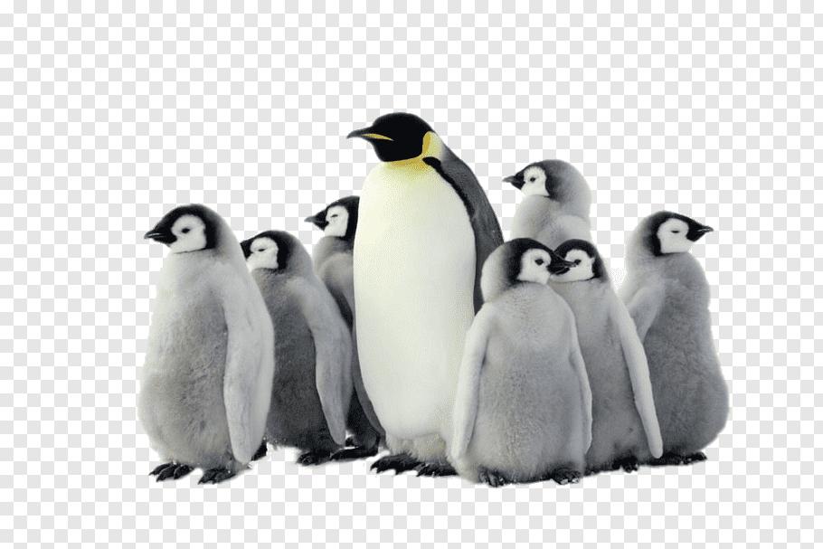 Flock of penguin graphic, Emperor Penguin Antarctica Bird.