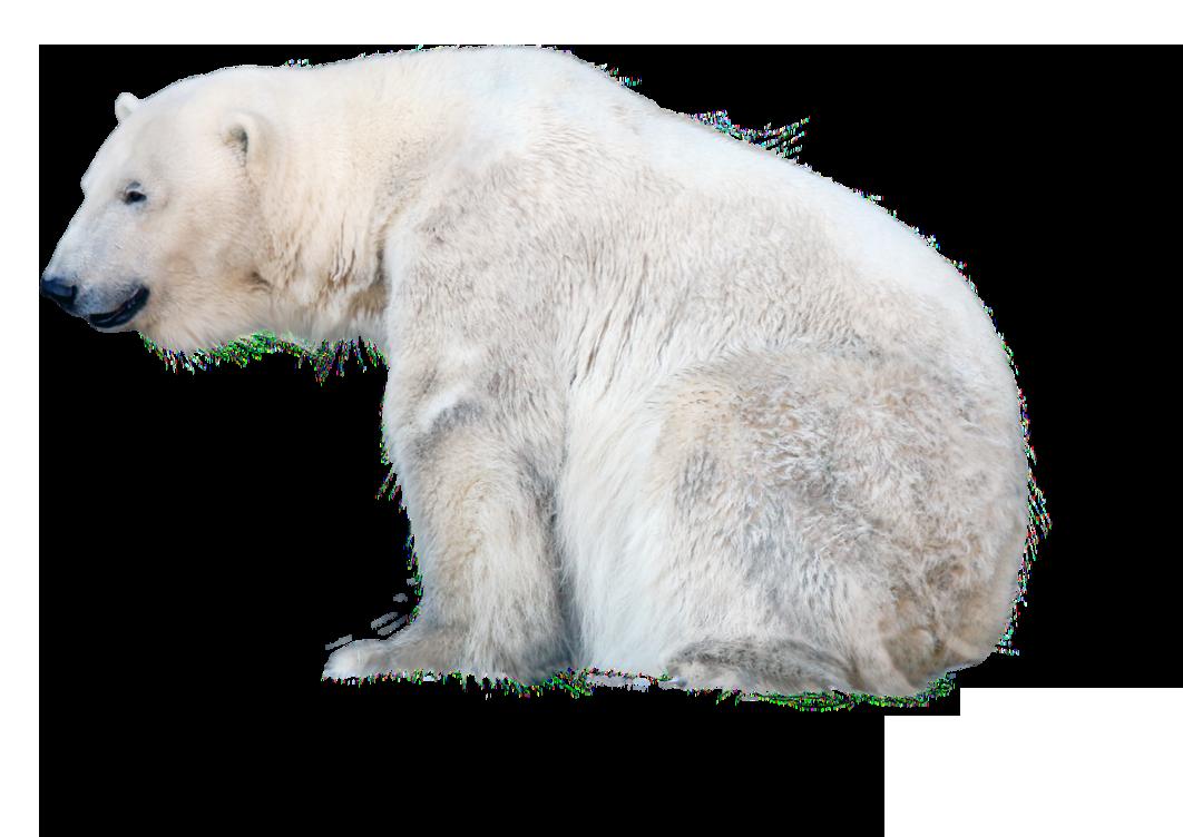 Polar bear PNG images free download.