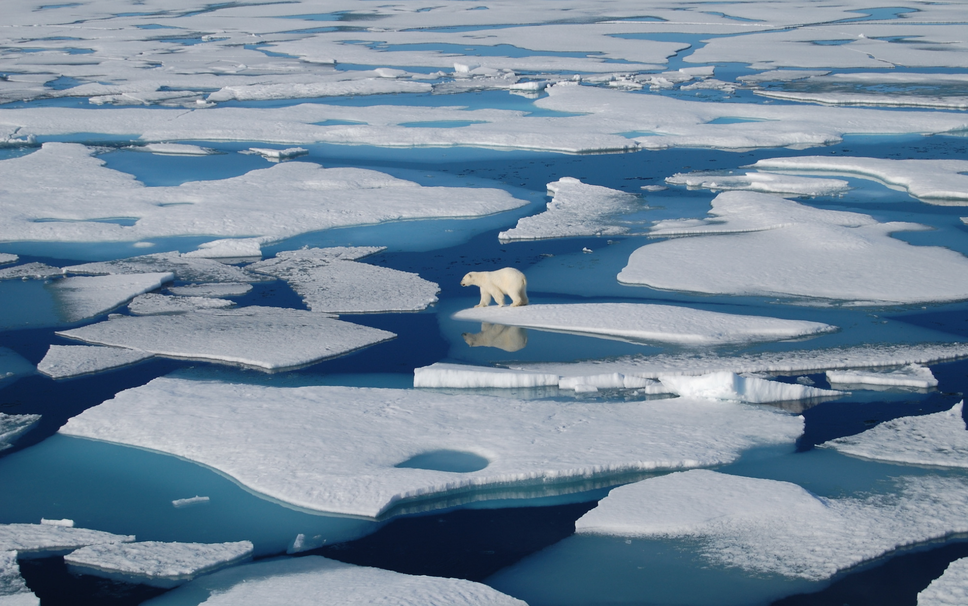 Download Free png Study reveals how Arctic Ocean drives ice melt.