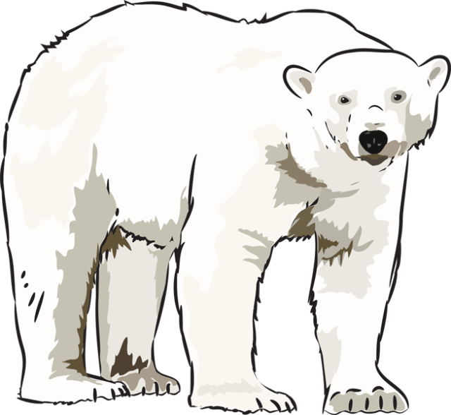 Clipart Of A Polar Bear.