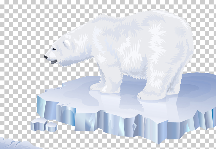 Polar bear Arctic Polar regions of Earth, White Bear.
