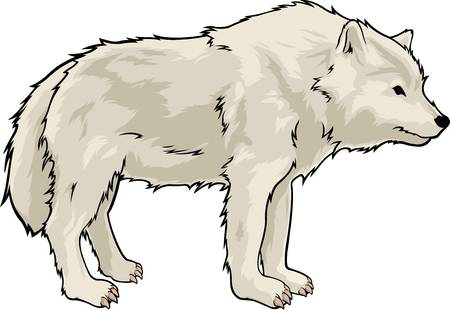 395 Arctic Wolf Cliparts, Stock Vector And Royalty Free Arctic Wolf.