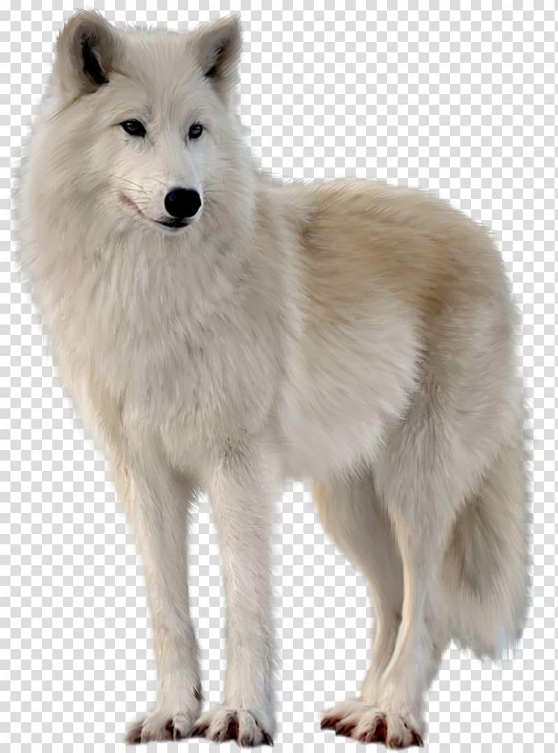 White wolf, Canadian Eskimo Dog Greenland Dog Alaskan tundra wolf.