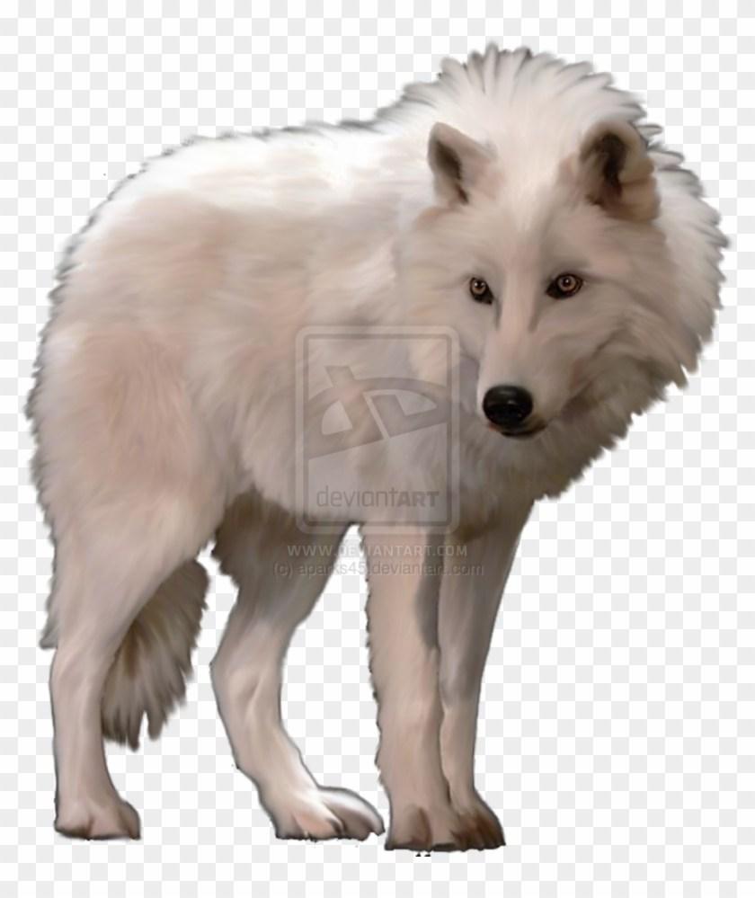 Arctic wolf clipart 5 » Clipart Portal.