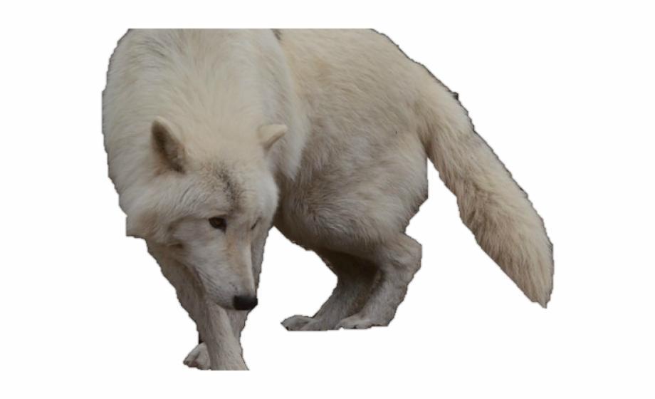 White Wolf Clipart Wolf Silhouette.