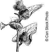 Vector Clip Art of Plant.
