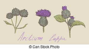 Arctium lappa Vector Clipart EPS Images. 6 Arctium lappa clip art.