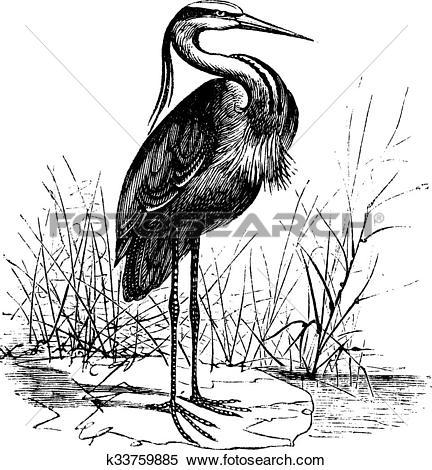 Clipart of Common European heron (Ardea cinerea) or Grey heron.