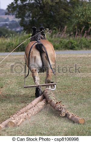 Pictures of Ardennes horse pulls some tree trunks csp8106998.