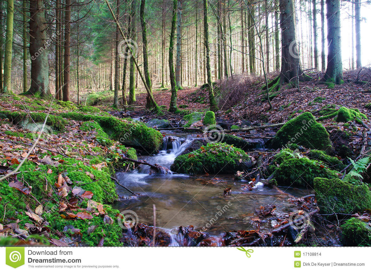 Little Creeck In The Belgian Ardennes Stock Images.