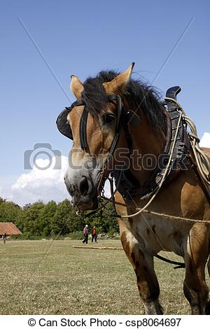 Picture of Ardennes horse with harness in front of a wagon.