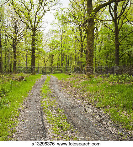 Stock Images of Dirt road surrounded by trees in Ardennes Forest.