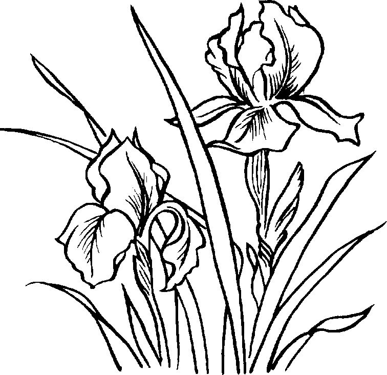 Black And White Flower Art.