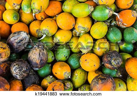 Stock Photo of Betel nut put on the ground for drying. (Areca.