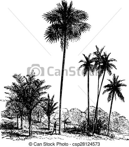 Vectors Illustration of Sago, Ordinary palm tree, Areca catechu.