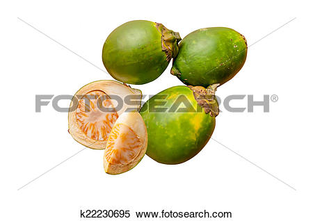 Stock Image of Betel palm,Areca catechu k22230695.