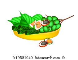 Areca catechu linn Clipart Vector Graphics. 15 areca catechu linn.