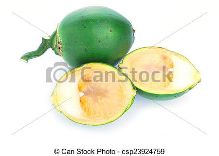 Stock Images of Betel nut fresh betel palm, Areca palm (Areca.