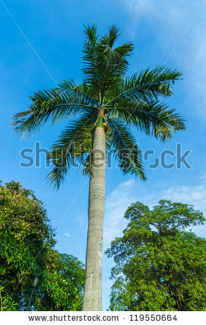 Areca Nut Stock Photos, Royalty.