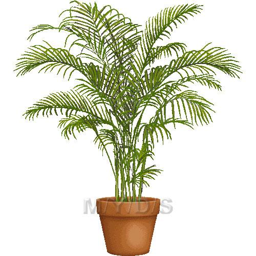 Golden Cane Palm, Areca Palm clipart / Free clip art.