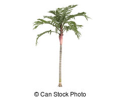 Areca palm Illustrations and Stock Art. 85 Areca palm illustration.