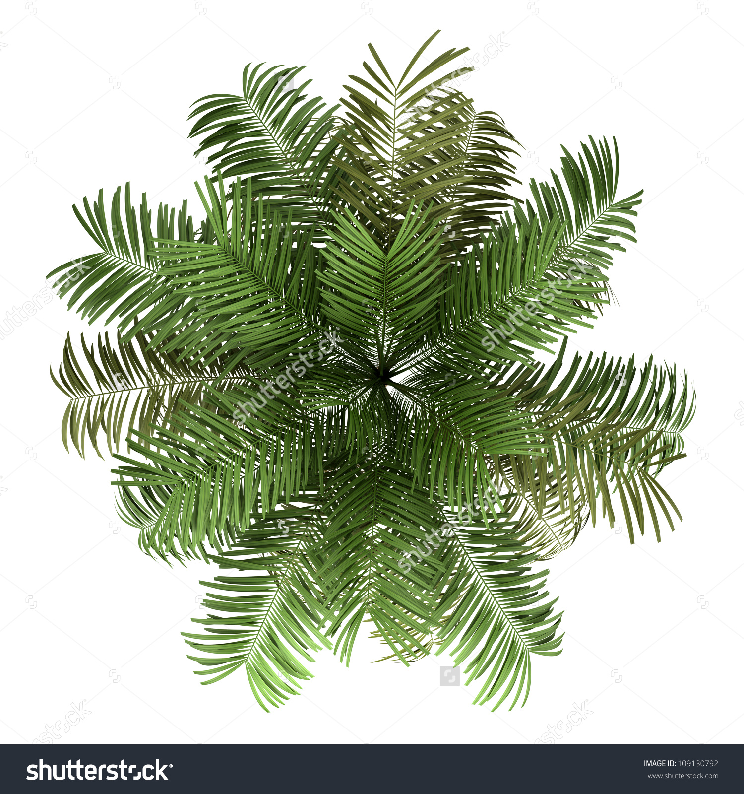Top View Areca Palm Tree Isolated Stock Illustration 109130792.