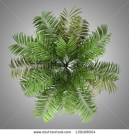 Top View Silhouette Areca Palm Tree Stock Illustration 160368812.