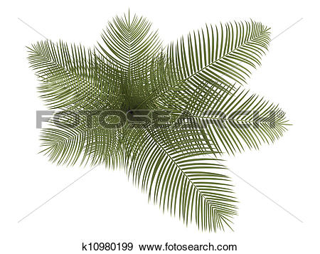 Stock Illustration of Areca palm houseplant k10980199.