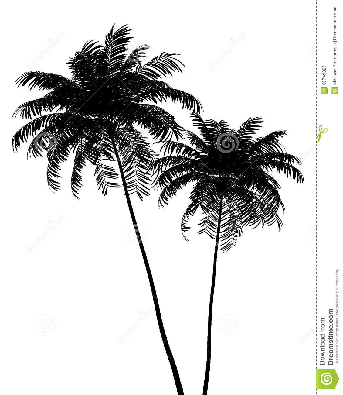 Silhouette Of Two Areca Palm Trees Isolated On White Royalty Free.