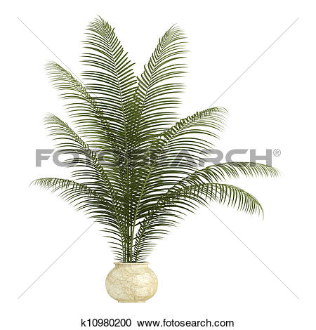 Stock Illustrations of Areca palm houseplant k10980200.