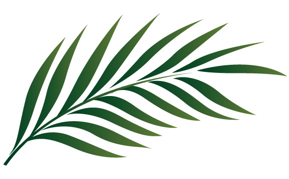 Palm frond palm leaf clipart #12