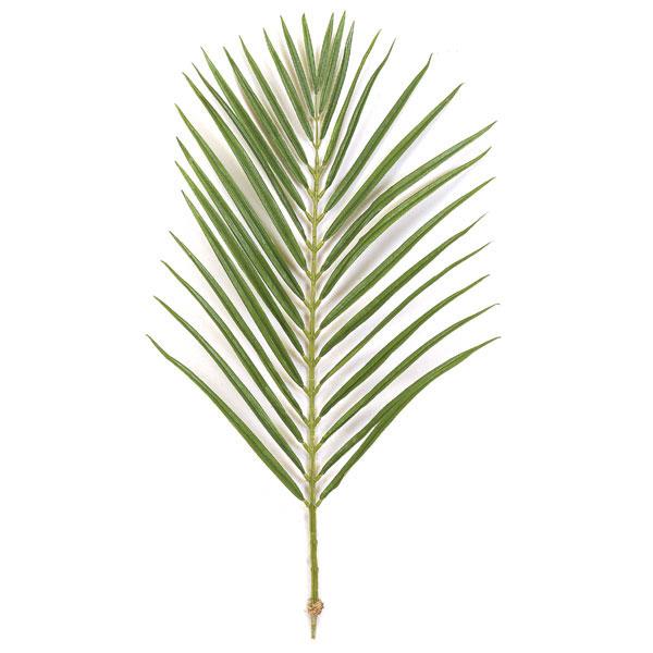 Areca palm clipart #4
