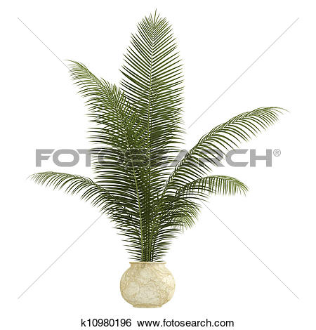 Stock Illustration of Areca palm houseplant k10980196.