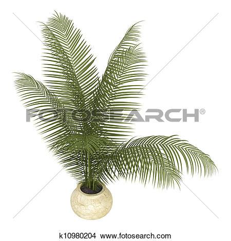 Areca palm clipart #12