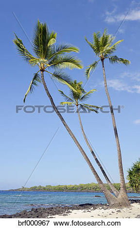 Picture of USA, Hawaii, Big Island, Honaunau.