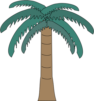 Arecaceae (Palm Tree) 2.