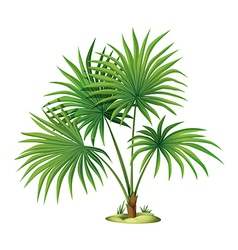Arecaceae Vector Images (over 30).