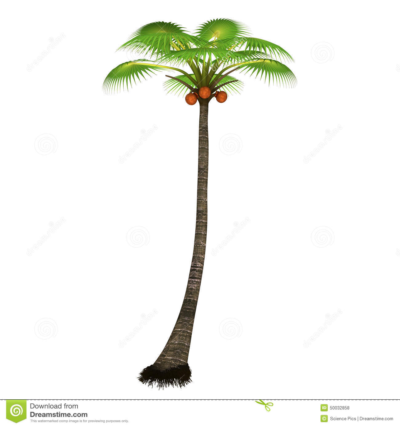 Palm Tree Stock Illustration.