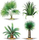 Arecaceae Clip Art.