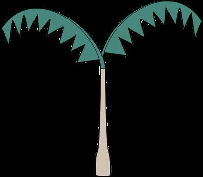 Arecaceae (Palm Tree) 1.